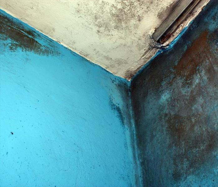 Mold Remediation Americus Mold-Tips for Preventing Fungi Growth